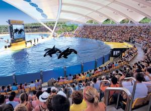 orcas-loro-parque-3
