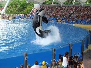 whales-at-loro-parque